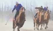 Môn thể thao đánh bóng trên lưng lạc đà tại Trung Quốc