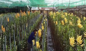 Vườn lan hơn 20.000 m2 ở Sài Gòn tất bật trước Tết