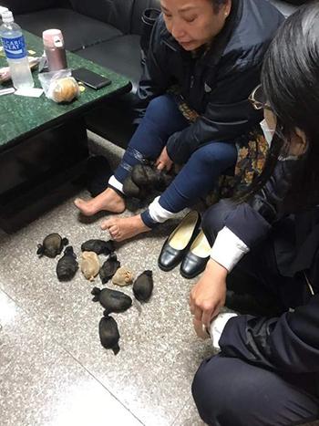 Người phụ nữ 60 tuổi bị phát hiện giấu 24 con chuột nhảy dưới váy. Ảnh: Coast Guard Administration
