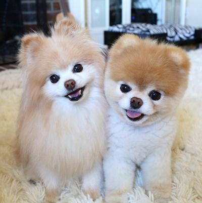 Boo (phải) và Buddy. Ảnh: Facebook.