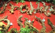 'Báu vật đại ngàn' sâm Ngọc Linh được trưng bày ở Hà Nội