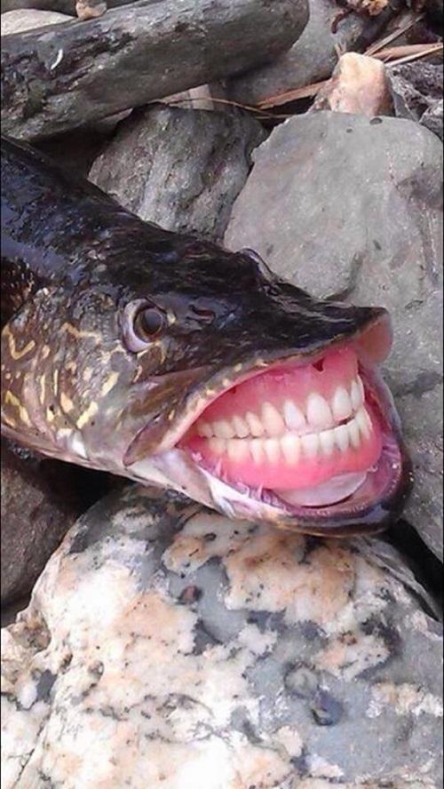 Cá nhà bác sĩ nha khoa.