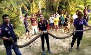 Hổ mang chúa dài gần 6 m xâm nhập nhà dân Thái Lan