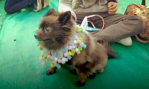Ngày hội thú nuôi lớn nhất Ấn Độ