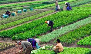 Nông sản 'chuẩn' hữu cơ phải đáp ứng điều kiện sản xuất, ghi nhãn