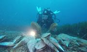 Trai khổng lồ chết hàng loạt dưới đáy biển Địa Trung Hải