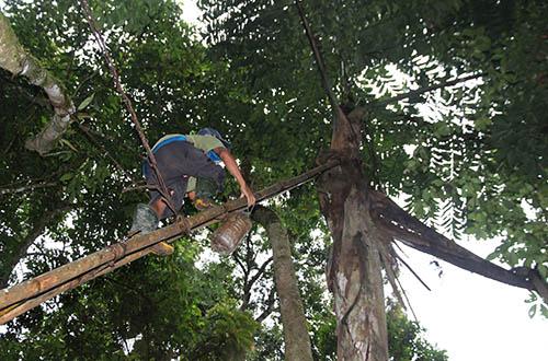 Anh Zênh mang can và rựa treo lên các nâng thang lên ngọn cây Trđin lấy rượu. Ảnh: Đắc Thành.