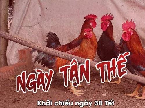 Phim kinh dị thường niên của loài gà.