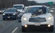 Người Mỹ dí súng ép tài xế dừng xe, cứu ông lão bám ở nắp ca pô