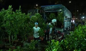 Hoa Tết tất bật xuống phố Sài Gòn