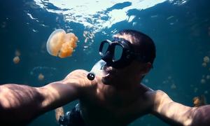 Dịch vụ bơi trong hồ sứa di sản thế giới