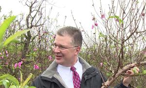 Đại sứ Mỹ học ghép cành đào Tết