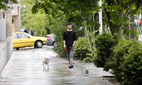 Người đàn ông dắt chó trên đường phố Tehran hồi tháng 5 năm ngoái. Ảnh: AFP.