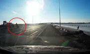 Trượt ngã trên cao tốc, nai sừng tấm suýt gây tai nạn giao thông