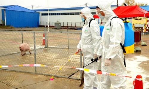 Cán bộ thú y diễn tập phun thuốc phòng ngừa dịch tả lợn châu Phi. Ảnh: CNN.