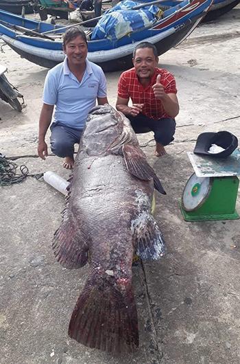 Con cá mú nặng 82kg được ngư dân Quảng Trị bắt được vào ngày cuối năm. Ảnh: Hoàng Phong