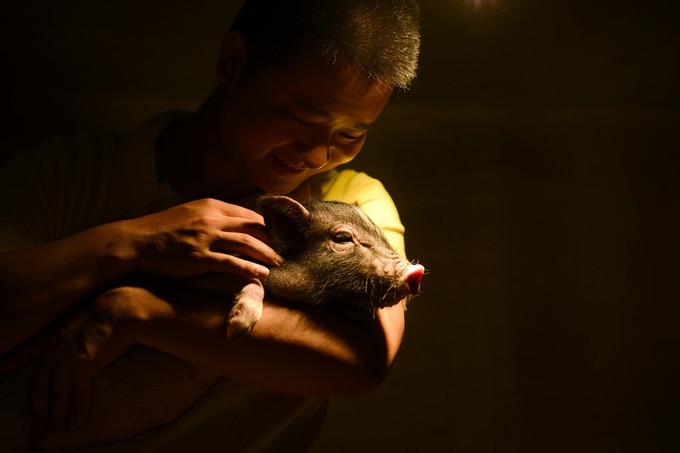 Công viên lợn ở Trung Quốc gây chú ý trong dịp xuân Kỷ Hợi
