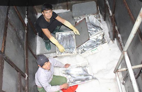 Nhiều tàu trúng đậm cá hố khi cập cảng Lạch Quèn. Ảnh: Lê Nguyễn.