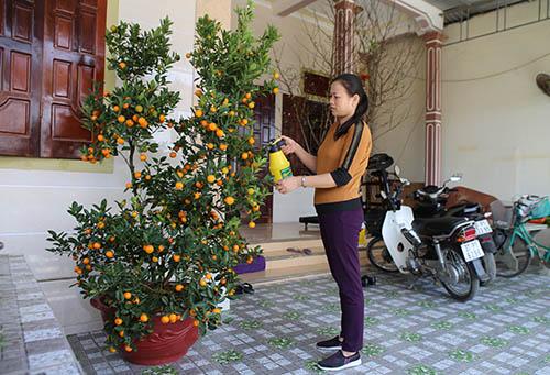 Bà Hiền chăm sóc cây quất mà con trai sắm Tết. Ảnh: Nguyễn Hải.