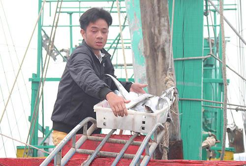 Cá được ngư dân đưa khỏi tàu. Ảnh: Lê Nguyễn.