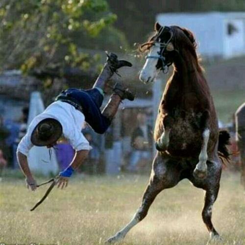 Khi ngựa thể hiện võ nghệ cao cường.