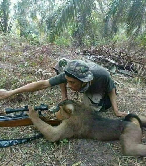 Học viên khỉ tập ngắm bắn.