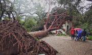 Bão lớn làm bật cây, gây ngập đường ở Mỹ