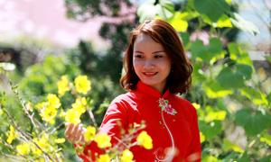Vườn mai 2.000 gốc chỉ phục vụ khách tham quan dịp Tết ở Nha Trang