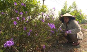 Cụ bà 'biến' bãi rác thành vườn hoa ở Đồng Tháp