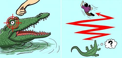Kiến thức giúp bạn thoát nạn khi gặp cá sấu, rắn độc