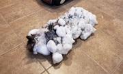 Mèo hồi sinh sau khi đông cứng dưới trời tuyết -8 độ C