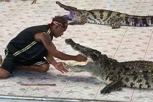 Cá sấu tấn công huấn luyện viên tại công viên Phokkathara, Chiang Rai, Thái Lan. Ảnh: ViralPress.