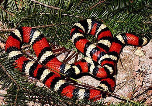 Có chuyện rắn trả thù người sau khi bắt hụt?