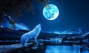 Tại sao động vật có vú thay đổi nhịp sinh học đêm trăng tròn?