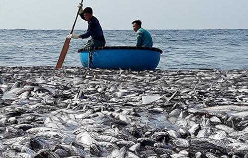 Mẻ cá bè xước vàng 120 tấn ởngư trường Cồn Cỏ. Ảnh: Lê Văn Viện