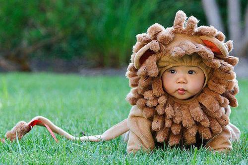 Sư tử đây.