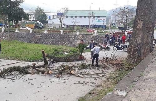 Cành cây rơi chết người ở cổng bến xe Hà Giang. Ảnh: H.G