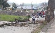 Cành cây gạo rơi chết một người ở Hà Giang