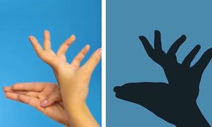 Cách tạo hình con vật bằng bàn tay gợi trí tưởng tượng