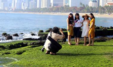 Kè chắn sóng ở Nha Trang 'nổi như cồn' vào mùa rêu xanh