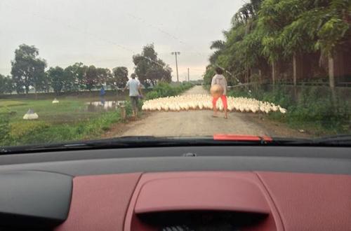 Cảnh thường thấy khi lái xe ở vùng quê.