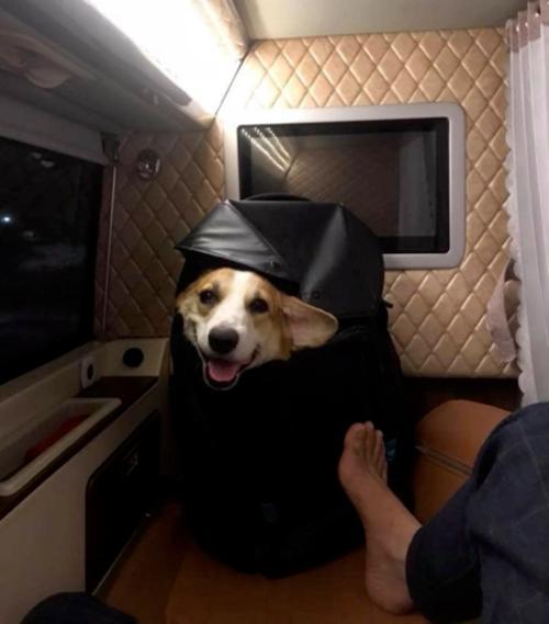 Sau khi dặn dò, con chó được nam thanh niên giấu vào balo và bắt được chuyến xe mới.Facebook: Trần Văn Mến