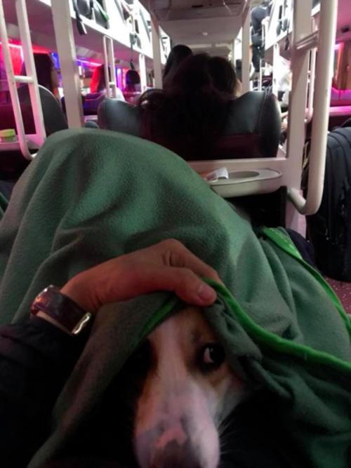 Nam thanh niên ôm thú cưng lên nằm chung ghế, tủ chăn giấunhà xe. Facebook: Trần Văn Mến