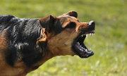 Tại sao chó phản chủ sau nhiều năm trung thành?