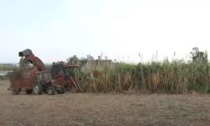 Hàng chục nghìn hecta cây trồng ở Gia Lai chống chọi với khô hạn