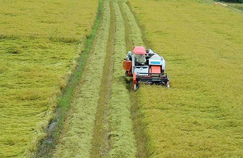 Miền Tây sản xuất trên 50% sản lượng lúa cả nước, cung ứng 90% sản lượng gạo xuất khẩu. Ảnh: Cửu Long
