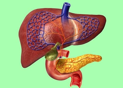 Sự thật thú vị về các bộ phận trong cơ thể người - 1