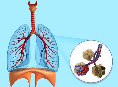 Sự thật thú vị về các bộ phận trong cơ thể người - 2
