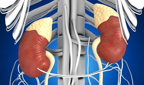Sự thật thú vị về các bộ phận trong cơ thể người - 4