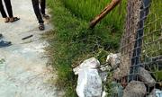 Hai vợ chồng kéo dây điện bẫy chuột, một người tử vong